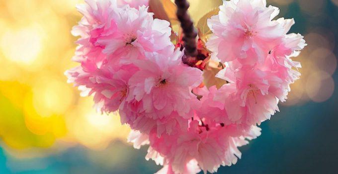 love-spring